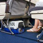 Как путешествовать с животными?