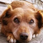 Почему собака поедает экскременты