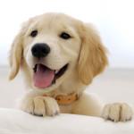 Поддержка чистоты в квартире с домашними животными