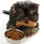 Особенности рациона собак мелких пород