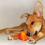 Полезные игрушки: что нужно вашей собаке?