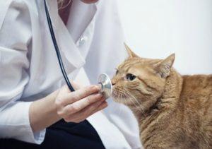 reklama_veterinarnoj_kliniki_1