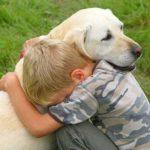Что надо знать перед процедурой усыпления собак?