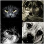 Особенности кремации домашних животных