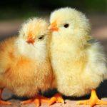 Болезни птиц и методы их лечения
