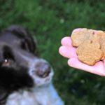 Собачий корм – его отличия и рекомендации по подбору