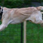 Профессиональная дрессировка щенков и собак