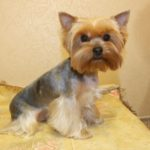 Особенности и характеристики груминга собак