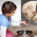 Общие рекомендации и правила по кормлению собак