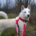 Всё необходимое для собак – их комфорта и безопасности