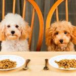 Сухой корм – здоровое и качественное питание для собак