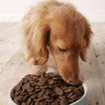 Сухой корм для собак: подбор и правила использования